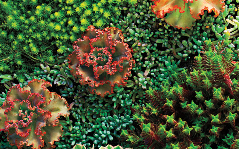 Garden Design Magazine backyard garden design ideas magazine australia Freshdesigning With Succulents The Holy Grail Of Heuchera Diggers Made In The Usa Durable And Pretty Outdoor Dcor Two People Steering Plant Lovers In