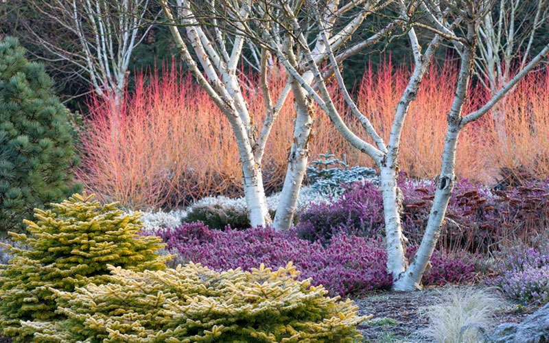 Garden Design Magazine - Winter 2017 | Garden Design
