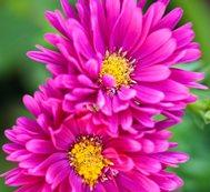 Flower Garden Design Ideas Garden Design