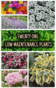 Top 21 Low Maintenance Plants For Your Garden Garden Design