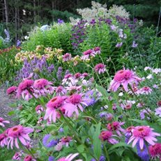 """Dream Team's"" Portland Garden Plant Paradise Country Gardens Caledon, ON"