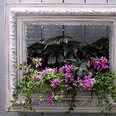Frame Planter, Diy Wall Planter Proven Winners Sycamore, IL