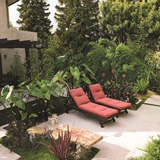 Southern Garden Design native ferns for southern gardens Garden Design Calimesa Ca