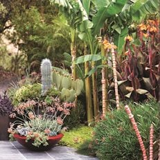 California Dreaming: a Davis Dalbok garden Living Green Design San Francisco, CA