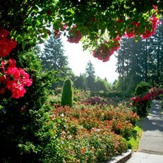 Portland's International Rose Test Garden Portland Parks & Recreation Portland, OR