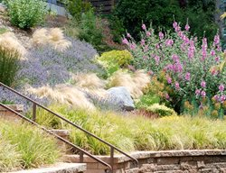Award-Winning Gardens Lesley Turner/LTLA Design Berkeley, CA