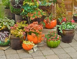 Container Garden Pictures Linda Ernst Portland, OR