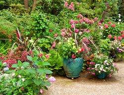Mixed Container Garden Container Garden Pictures Vina Winters West Linn, OR