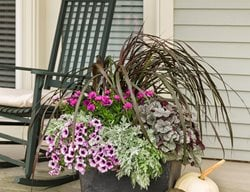 Purple Fall Pot, Fall Flower Pot Container Garden Pictures Proven Winners Sycamore, IL