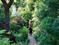 Shade Garden Pictures Gallery Garden Design