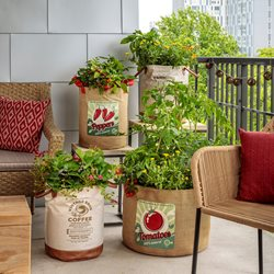 "Vegetables In Containers, Balcony Vegetable Garden ""Dream Team's"" Portland Garden Proven Winners Sycamore, IL"