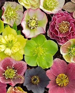 Gardening Design ad beautiful and attractive gardening design ideas 01 Hellebores Garden Design Calimesa Ca