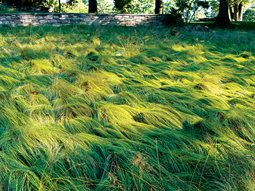 ornamental grass chanticleer wayne pa