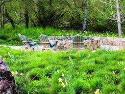ornamental grass greenlee and associates brisbane ca