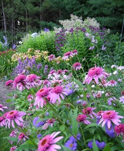 Flower Garden Ideas Designs perennial gardens | garden design