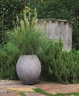 Ornamental Grasses | Garden Design