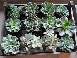 Notes from a Flower Farm: Decorating With Succulents Garden Design Calimesa, CA