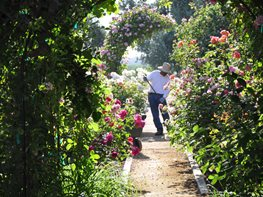 """Dream Team's"" Portland Garden Christopher Whelan (Homeowner) San Joaquin Valley, CA"