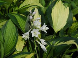 """Dream Team's"" Portland Garden Costa Farms Miami, FL"
