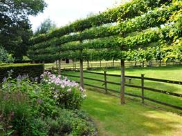 fence dream teams portland garden garden design - Fruit Garden Design