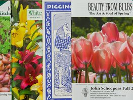 Gardening Catalogs, Winter Planning Garden Design Calimesa, CA