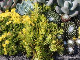 Blog of garden design magazine garden design - Succulent container gardens debra lee baldwin ...