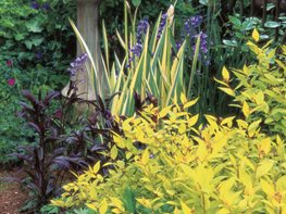 Foliage Plants, Garden Beautiful Foliage Plants for Your Perennial Garden Garden Design Calimesa, CA