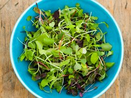 Growing Microgreens, Edibles Creating a Raised Bed Garden Garden Design Calimesa, CA