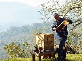 Rob Keller, Beekeeper, Napa Valley Bee Co Napa Valley Bee Co.  Napa, CA