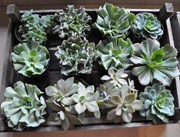 Decorating With Succulents Garden Design Calimesa, CA