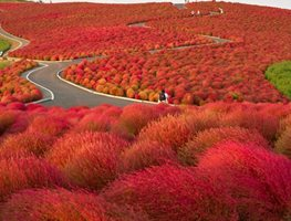 "Kochia Hill Hitachinaka City Japan ""Dream Team's"" Portland Garden Garden Design Calimesa, CA"