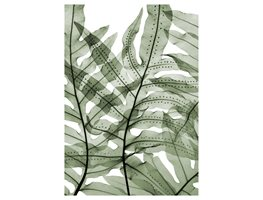 Cabbage Palm Fern