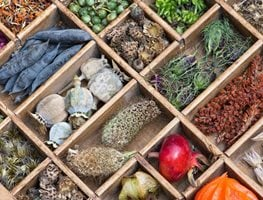 Seed Saving, Seed Storage Garden Design Calimesa, CA