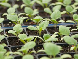 Seedlings, Tray Johnny's Selected Seeds ,