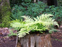 Visit Bellevue Botanical Garden To See The Fern Collection & More Garden Design Calimesa, CA
