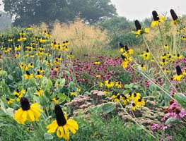 Emulate Nature with a Wild & Layered Garden