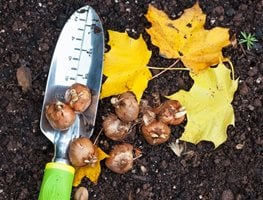 Fall Bulb Planting  Alamy Stock Photo Brooklyn, NY