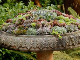Birdbath Container, Sempervivum Container Pot Incorporated Vancouver, BC