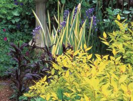 Foliage Plants For Your Garden Garden Design