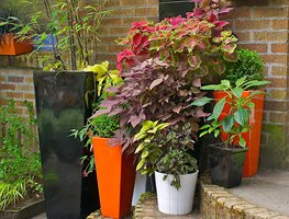 Shade Containers Janet Loughrey ,
