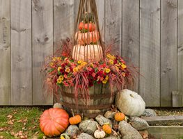 Fall Container, Barrel Planter, Pumpkins Proven Winners Sycamore, IL