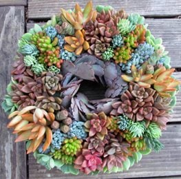 succulent wreath succulents garden design calimesa ca