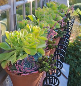 Terracotta Pots, Echeveria Pot Incorporated Vancouver, BC