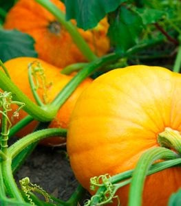 15 Fall Vegetables to Plant in Your Garden | Garden Design