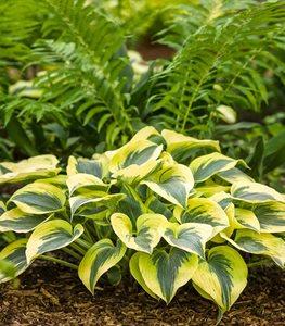 Top 20 Shade Plants Perennials Flowers And More Garden Design