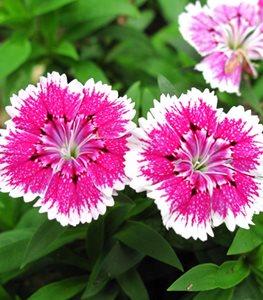 21 Easy To Grow Flowers For Beginners Garden Design