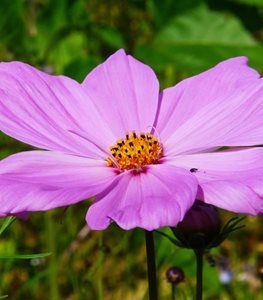 21 Easy to Grow Flowers for Beginners | Garden Design