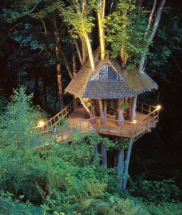Tree house in Oregon maples - Photo by: Mark Turner.