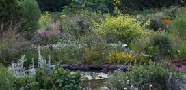 Lush Plantings Of Ornamental Grasses And Perennials Surround The Pond In Summer Chanticleer Wayne, PA