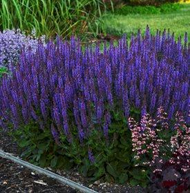 12 Mosquito Repellent Plants Garden Design